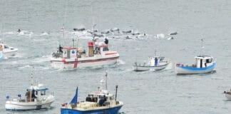 เทศกาลล่าวาฬ