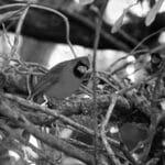 นกป่า