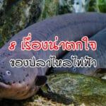 ปลาไหลไฟฟ้า