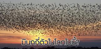 จำนวนนก