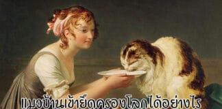 แมวบ้าน