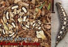 งูกาบูน