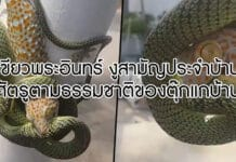 งูเขียว