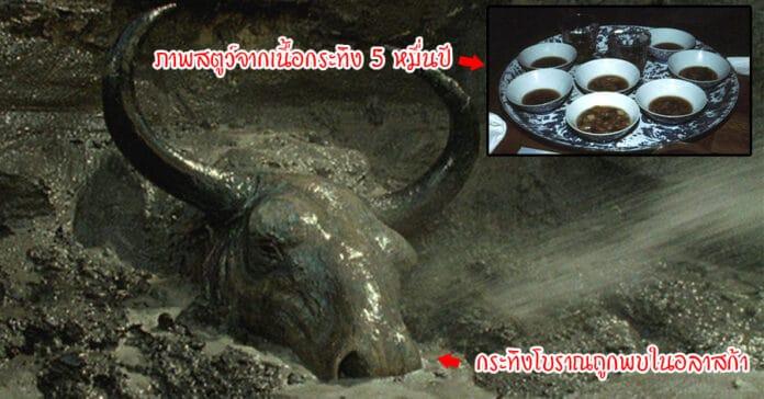 กินเนื้อกระทิงโบราณ