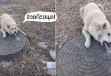 น้องหมา