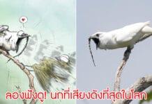 นกเสียงดังที่สุดในโลก