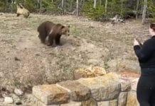 หมีกริซลี่